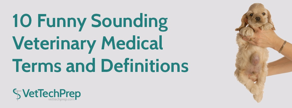 10-Funny-Sounding-Veterinary-Medical-Terms-and-Definitions--Do-You-Know-These