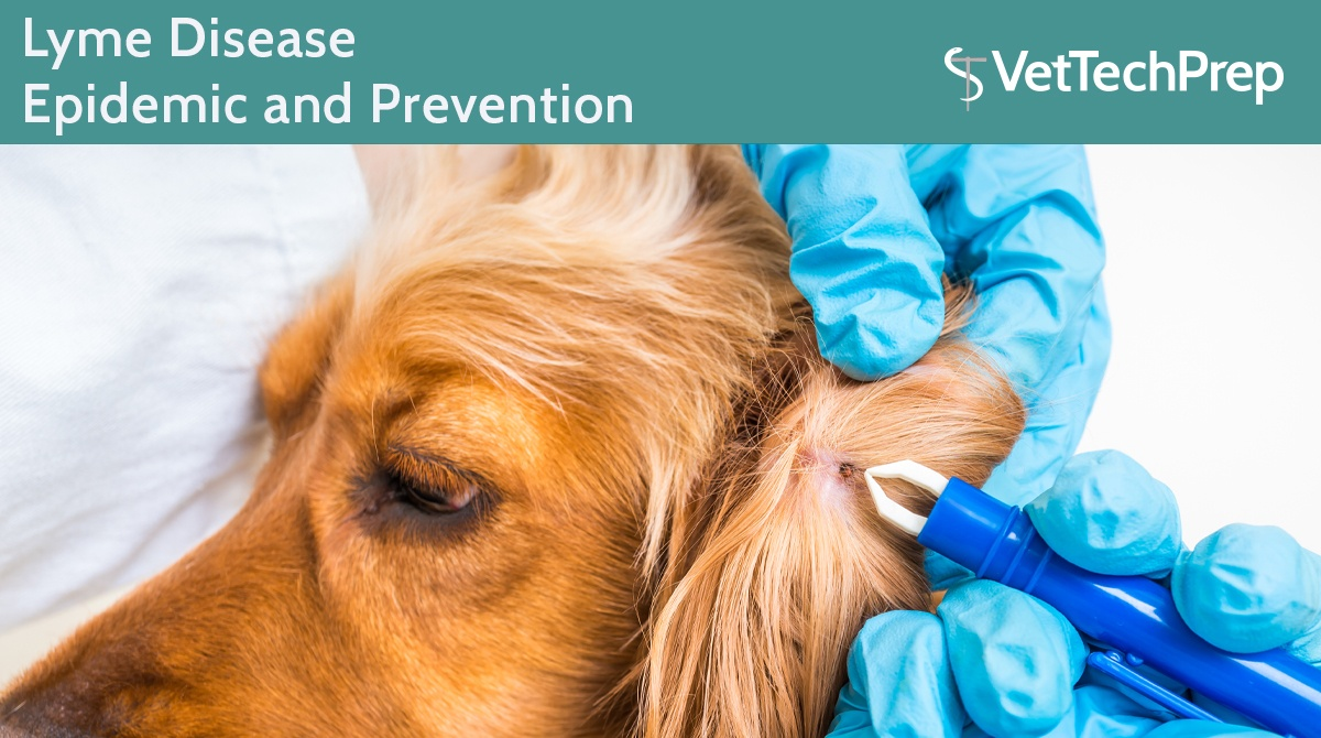 Lyme-Disease-Epidemic-and-Prevention1