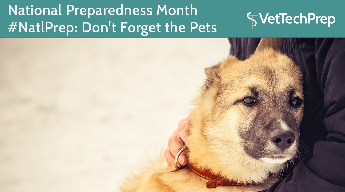 National-Preparedness-Month-#NatlPrep--Don't-Forget-the-Pets