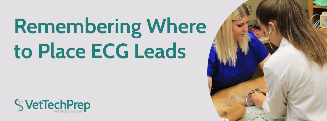 Remembering-Where-to-Place-ECG-Leads