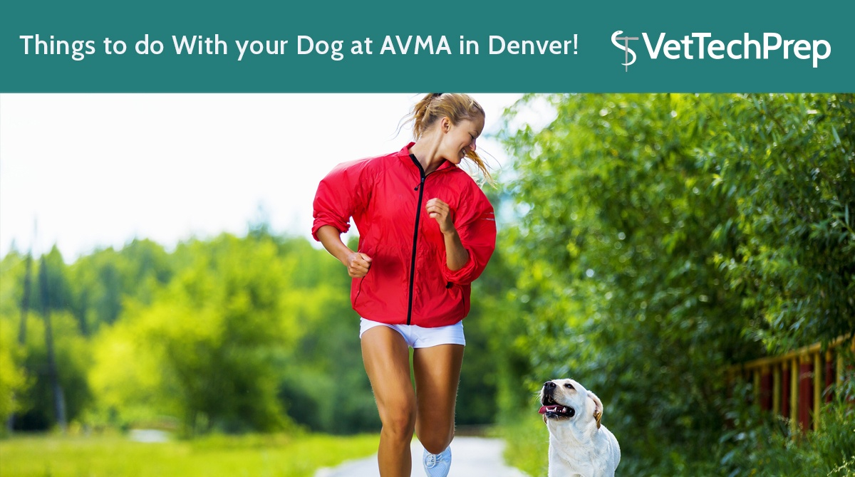 Things-to-do-With-your-Dog-at-AVMA-in-Denver!