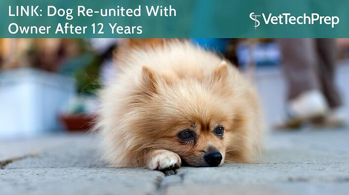 LINK-Dog-Re-united-With-Owner-After-12-Years.jpg
