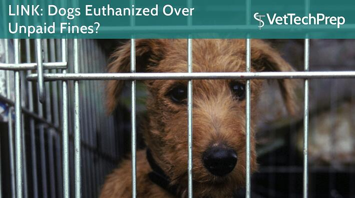 LINK-Dogs-Euthanized-Over-Unpaid-Fines-.jpg