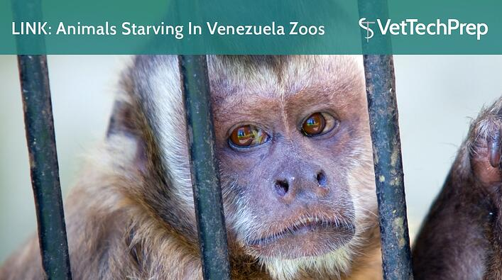 LINK-Animals-Starving-In-Venezuela-Zoos.jpg