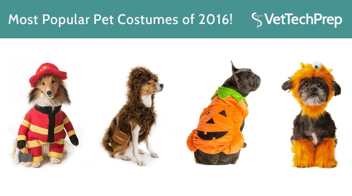 LINK-Most-Popular-Pet-Costumes-of-2016!.jpg