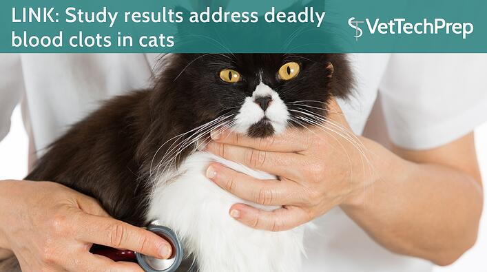 LINK-Study-results-address-deadly-blood-clots-in-cats.jpg