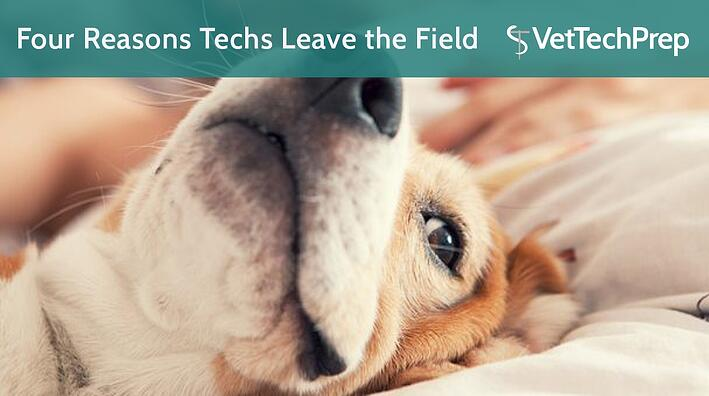 VTP--Four-Reasons-Techs-Leave-the-Field.jpg