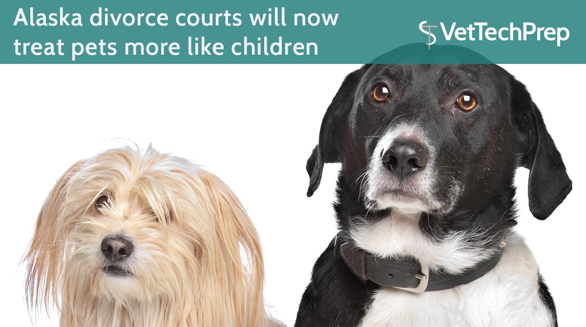 LINK-Alaska-divorce-courts-will-now-treat-pets-more-like-children.jpg