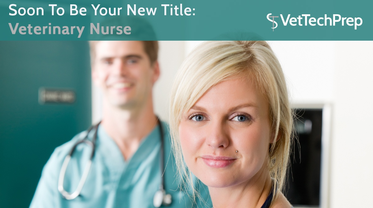 ARTICLE-Soon-To-Be-Your-New-Title--Veterinary-Nurse.jpg