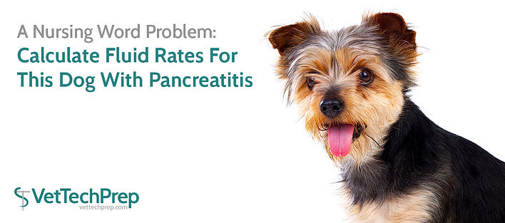 pancreatitis-blog-header.jpg
