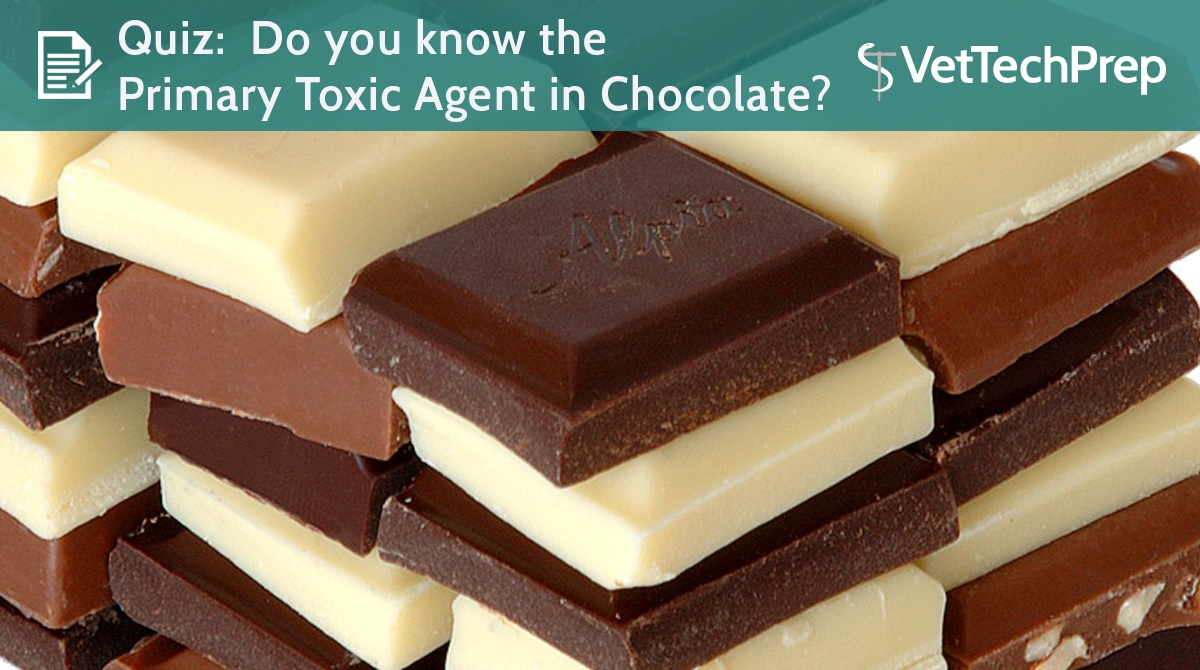 QUIZ-Do-you-know-the-primary-toxic-agent-in-chocolate.jpg