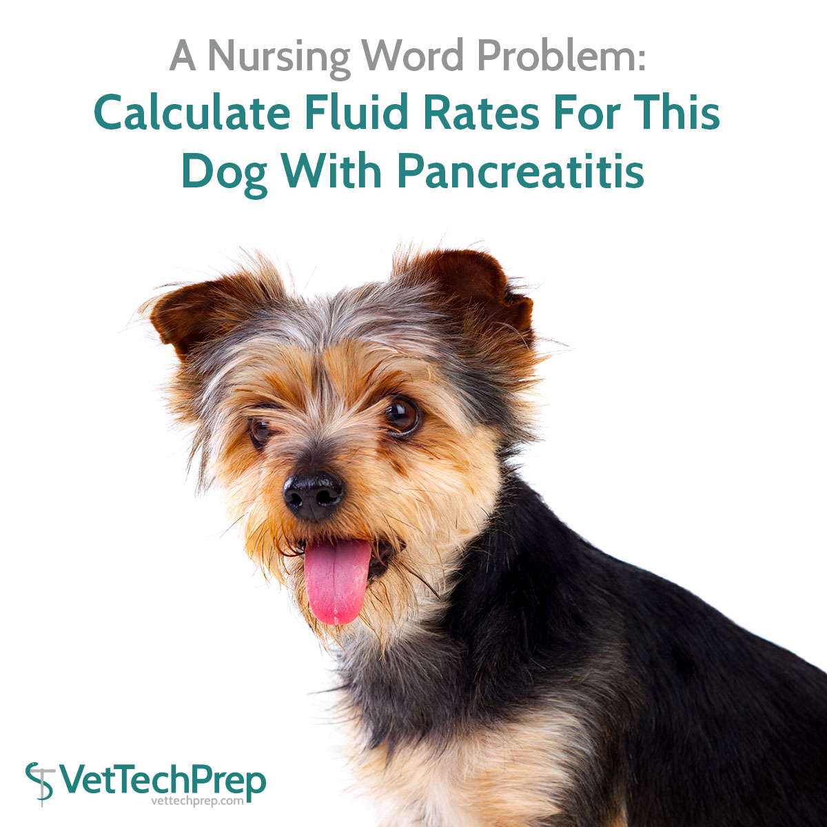 Calculate Fluid Rates For This Dog With Pancreatitis